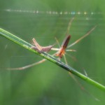 poze insecte