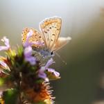 IMG_1193Florentina-Rafaila-galerie-foto-ro-web