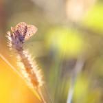 IMG_1281florentina-rafaila-galerie-foto-ro-web