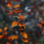 img_9224-florentina-rafaila-galerie-foto-ro-fotografii-macro-web