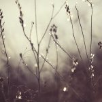img_9502-florentina-rafaila-galerie-foto-ro-fotografie-macro-web