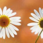 dsc04921fotografii-macro-closeup-bokeh-florentina-rafaila