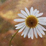dsc04923fotografii-macro-closeup-bokeh-florentina-rafaila