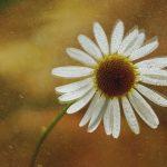dsc04928fotografii-macro-closeup-bokeh-florentina-rafaila