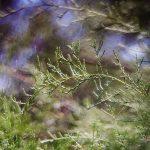dsc06914fotografii-macro-closeup-bokeh-florentina-rafaila