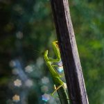 img_5559fotografii-macro-closeup-bokeh-florentina-rafaila