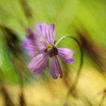 img_5912fotografii-macro-closeup-bokeh-florentina-rafaila