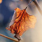 img_6549fotografii-macro-closeup-bokeh-florentina-rafaila
