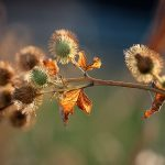 img_6551fotografii-macro-closeup-bokeh-florentina-rafaila