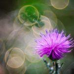 img_6820fotografii-macro-closeup-bokeh-florentina-rafaila