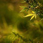 img_7736fotografii-macro-closeup-bokeh-florentina-rafaila