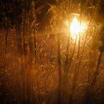 img_7831fotografii-macro-closeup-bokeh-florentina-rafaila