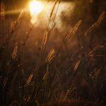 img_7836fotografii-macro-closeup-bokeh-florentina-rafaila