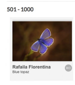 florentina rafaila concurs cewe