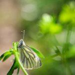 fotografie cu fluture