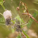 insecte romania