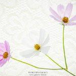 fotografie cu flori