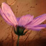img_1699-florentina-rafaila-galerie-foto-ro-web