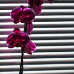 img_8510-florentina-rafaila-galerie-foto-ro-web