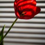 img_8516-florentina-rafaila-galerie-foto-ro-web