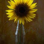 img_9676-florentina-rafaila-galerie-foto-ro-web