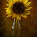 img_9686-florentina-rafaila-galerie-foto-ro-web
