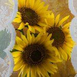 img_9704-florentina-rafaila-galerie-foto-ro-web